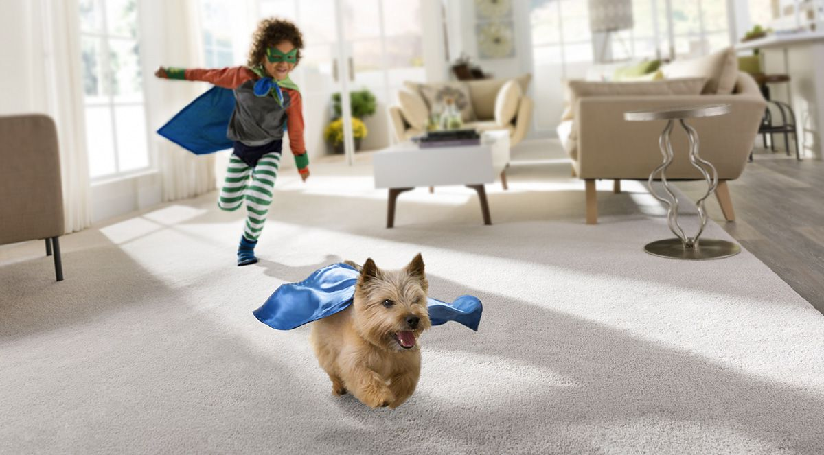 PetFriendly carpet from STAINMASTER® Coles Fine