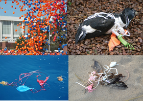 Image result for balloons killing birds