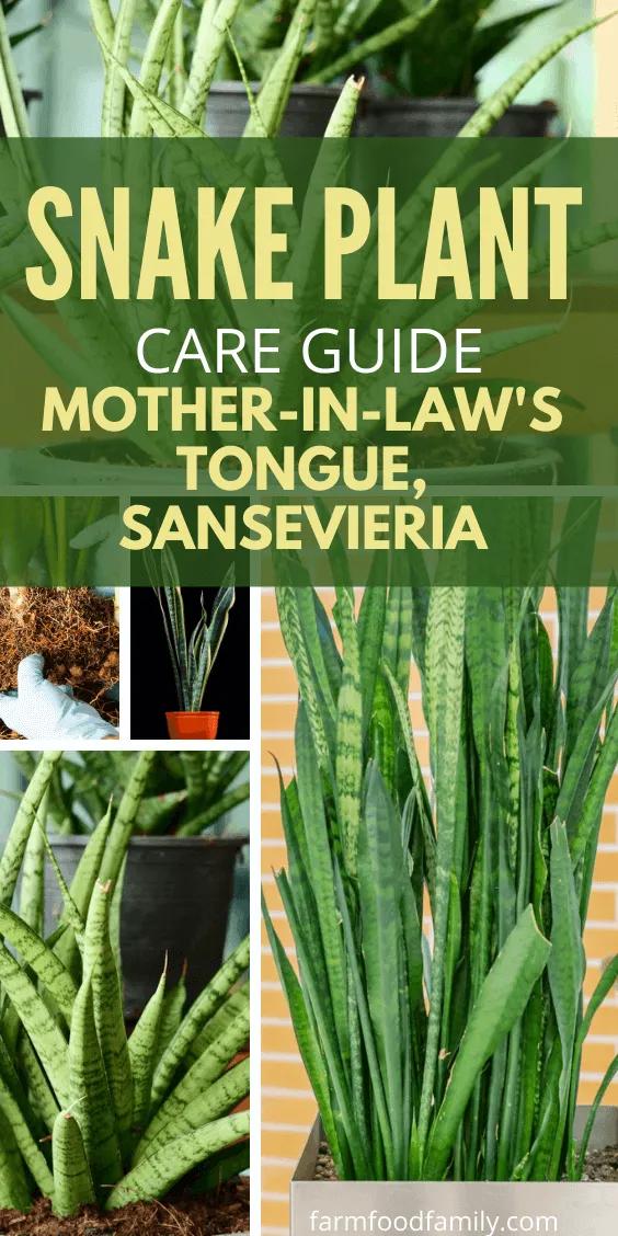 3d58527a8d9e339f9187b31d70f496bb - How To Get Rid Of Mother In Law Tongue Plants