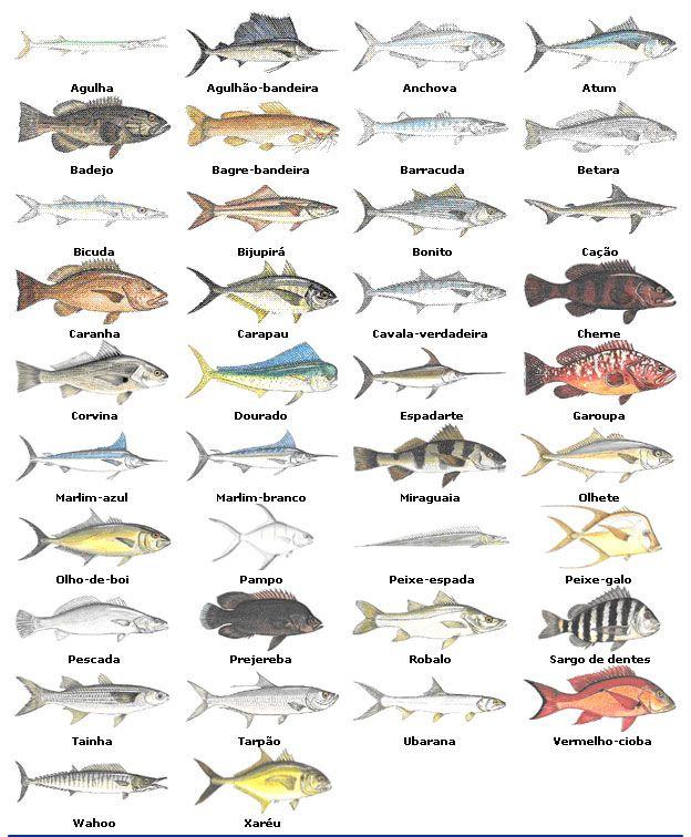Excepcional Peixes agua salgada | Peixes - água salgada e outras criaturas  ZC65