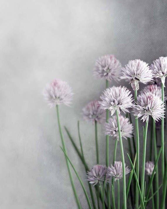 Best Farmhouse Botanical Art Lavender And Gray Kitchen Art 400 x 300