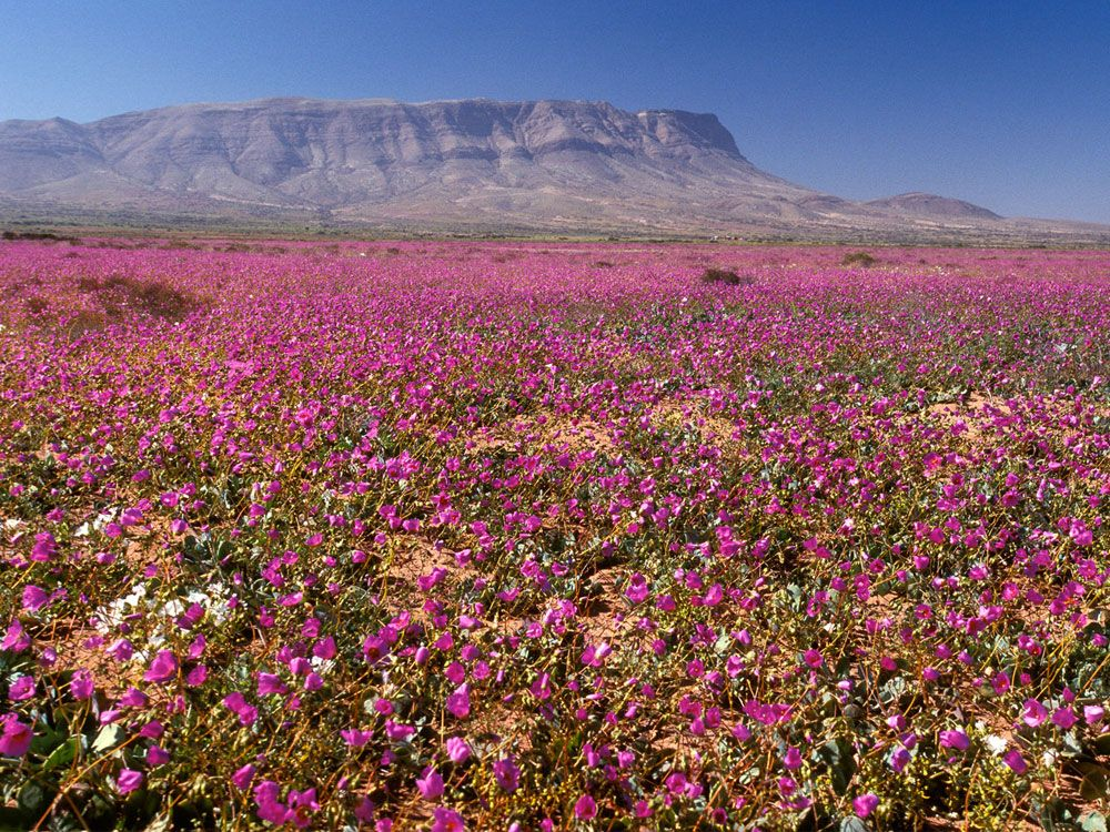 Death valley super bloom 2016 landscapes of the world pinterest death valley super bloom 2016 mightylinksfo