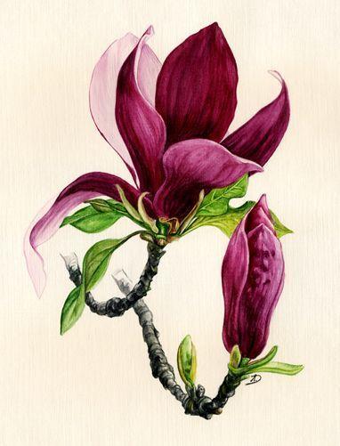 Photo of Magnolia #watercolorarts