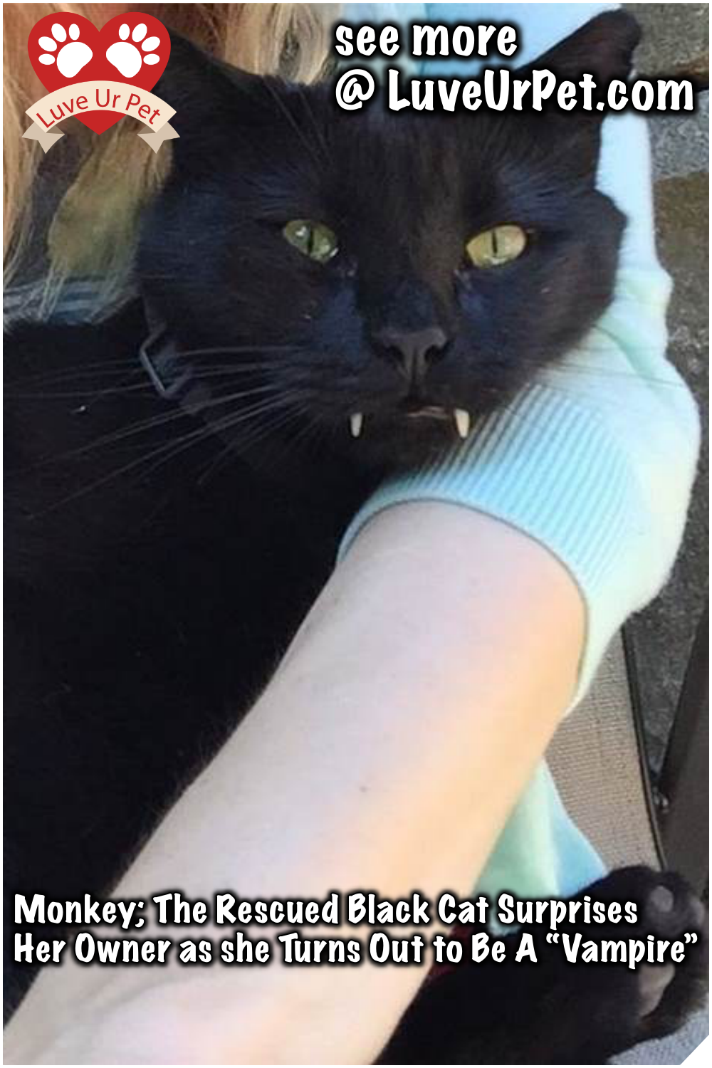Monkey The Rescued Black Cat Surprises Her Owner As He Turns Out To Be A Vampire Monkey Rescuecat Blackcat Surprises Owner Black Cat Cats Pet Monkey