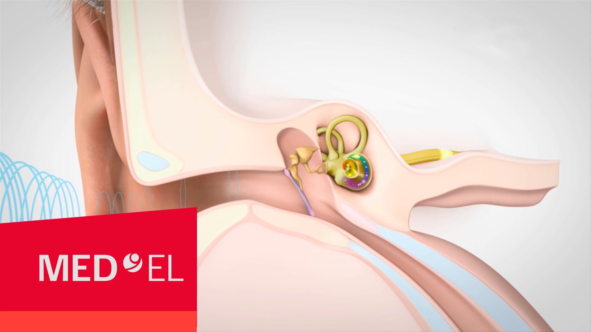 Video about Hearing and How it Works | MED-EL | Physics | Pinterest ...
