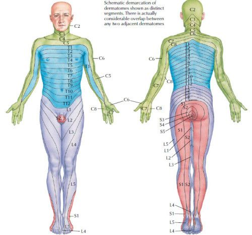 Sensory Pathways Dermatomes Health Medicine And Anatomy Reference