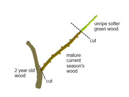 How To Propagate Tree Cuttings Extremely Useful Info