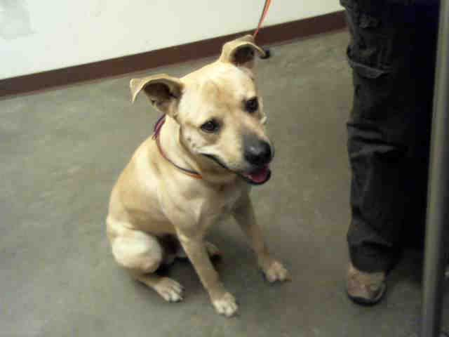 Petharbor Com Animal Shelter Adopt A Pet Dogs Cats Puppies Kittens Humane Society Spca Lost Found