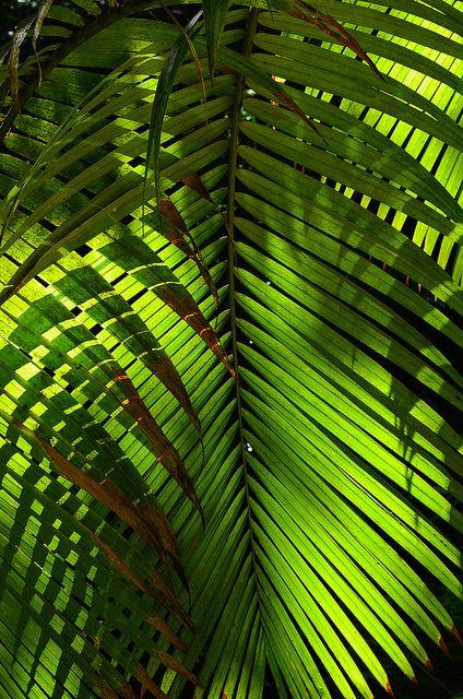 The Hawaii Tropical Botanical Garden #18