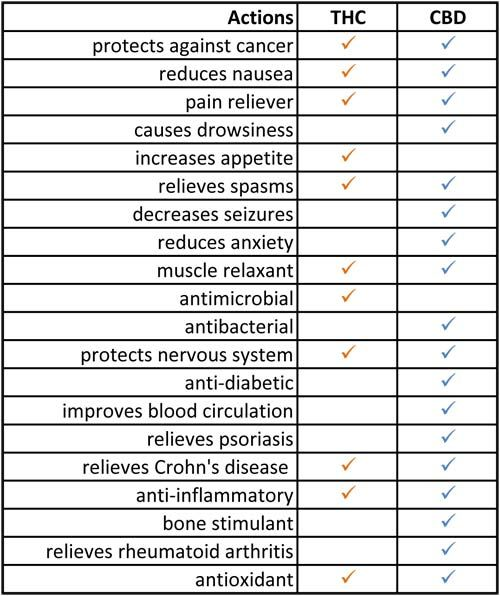 Cbd  thc benefits chart go to this link kannaway the buzz launch enter id also rh pinterest