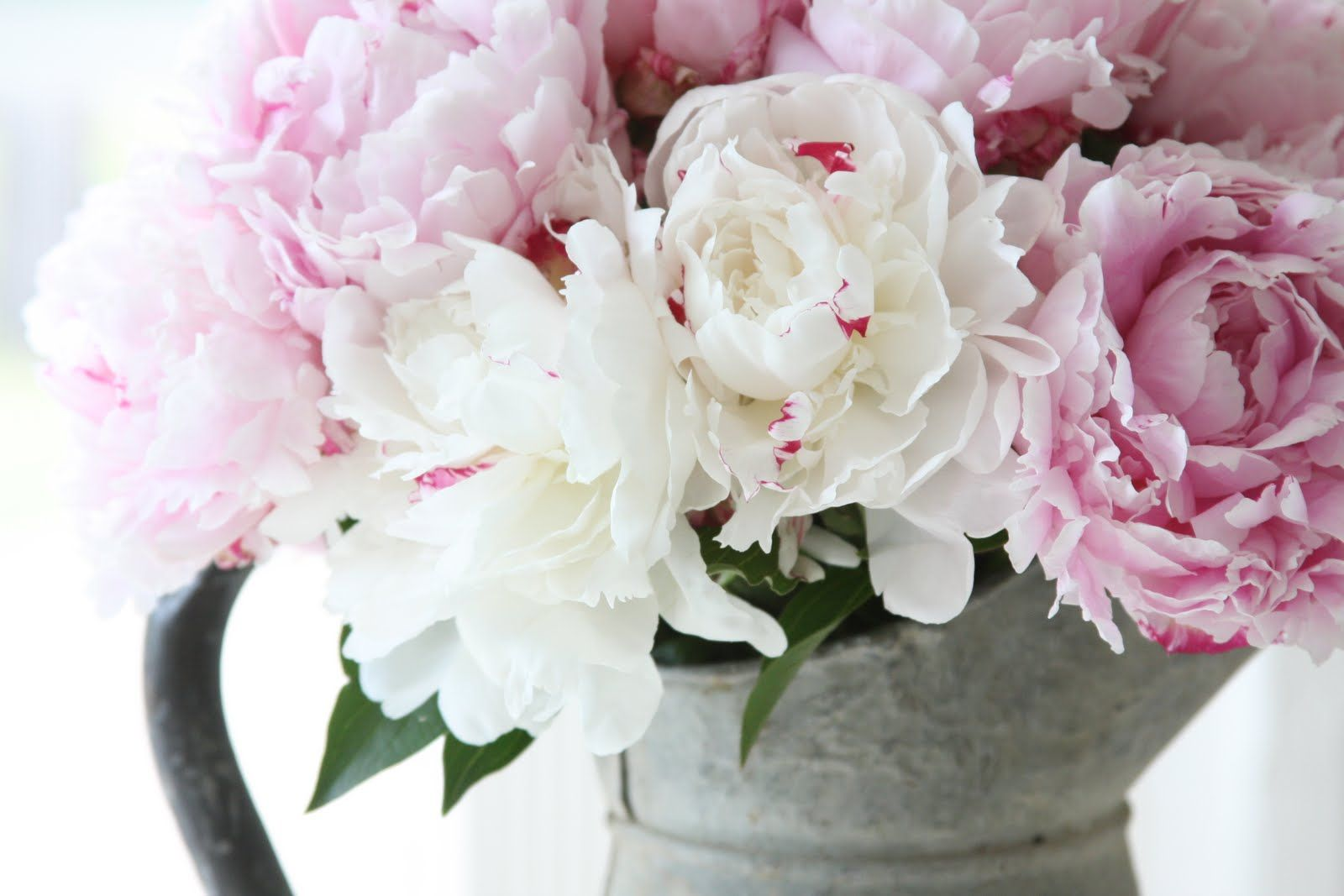 I love peonies!!!  I've never had any luck growing them though :(
