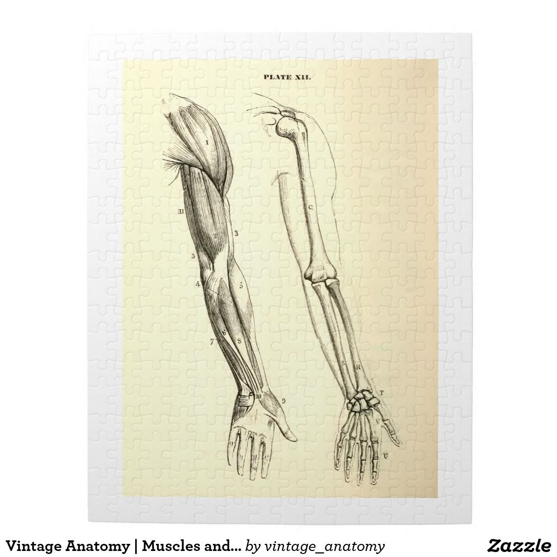 Vintage Anatomy Muscles And Bones Of The Arm Jigsaw Puzzle