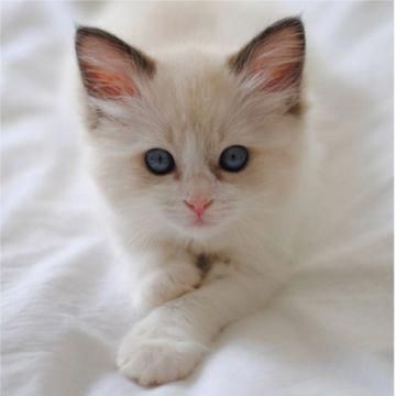 Read Information On Cat Training Cattraining Kitten Pictures Cat Having Kittens White Kittens