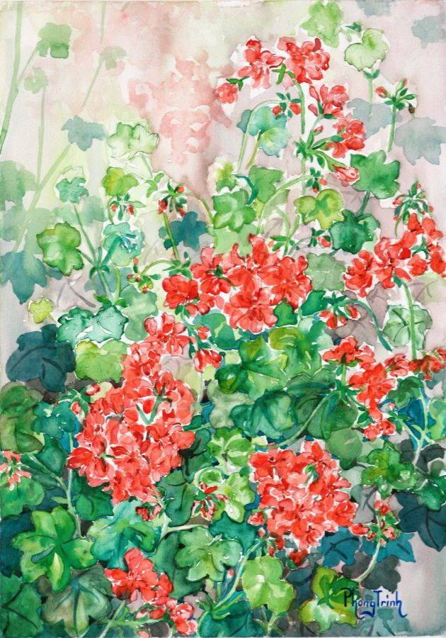 Red Ivy-leafed Pelargoniums