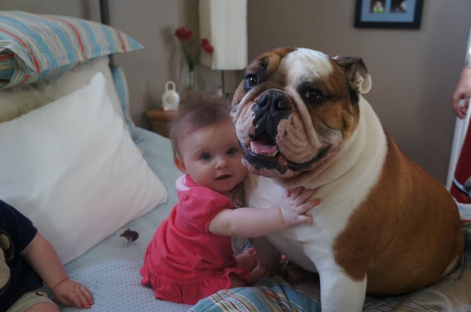The Best Friend A Girl Can Have Cute Bulldogs