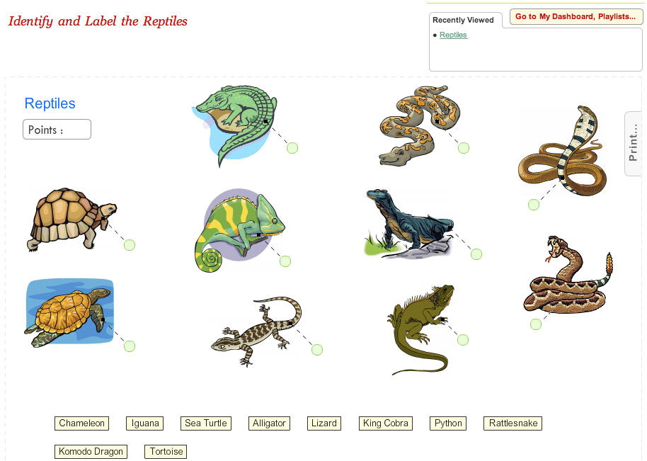 Game Label The Reptile Interactive Science Science Diagrams Science Games For Kids