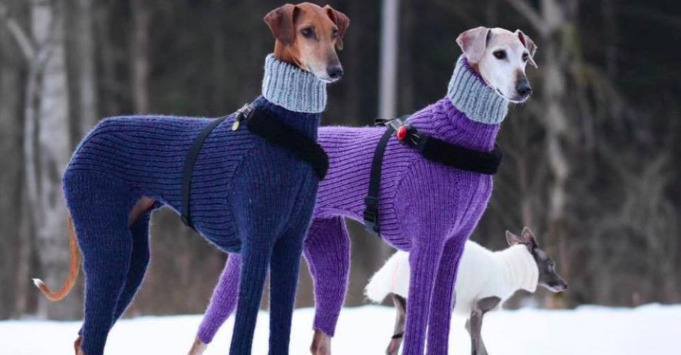 Cat Meme Sweater Couple