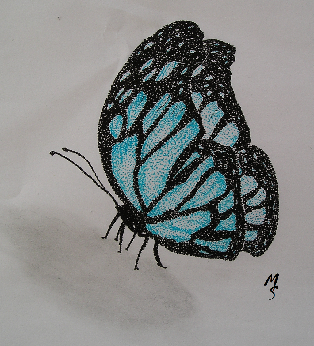 Butterfly Drawing Tumblr Www Topsimages Com
