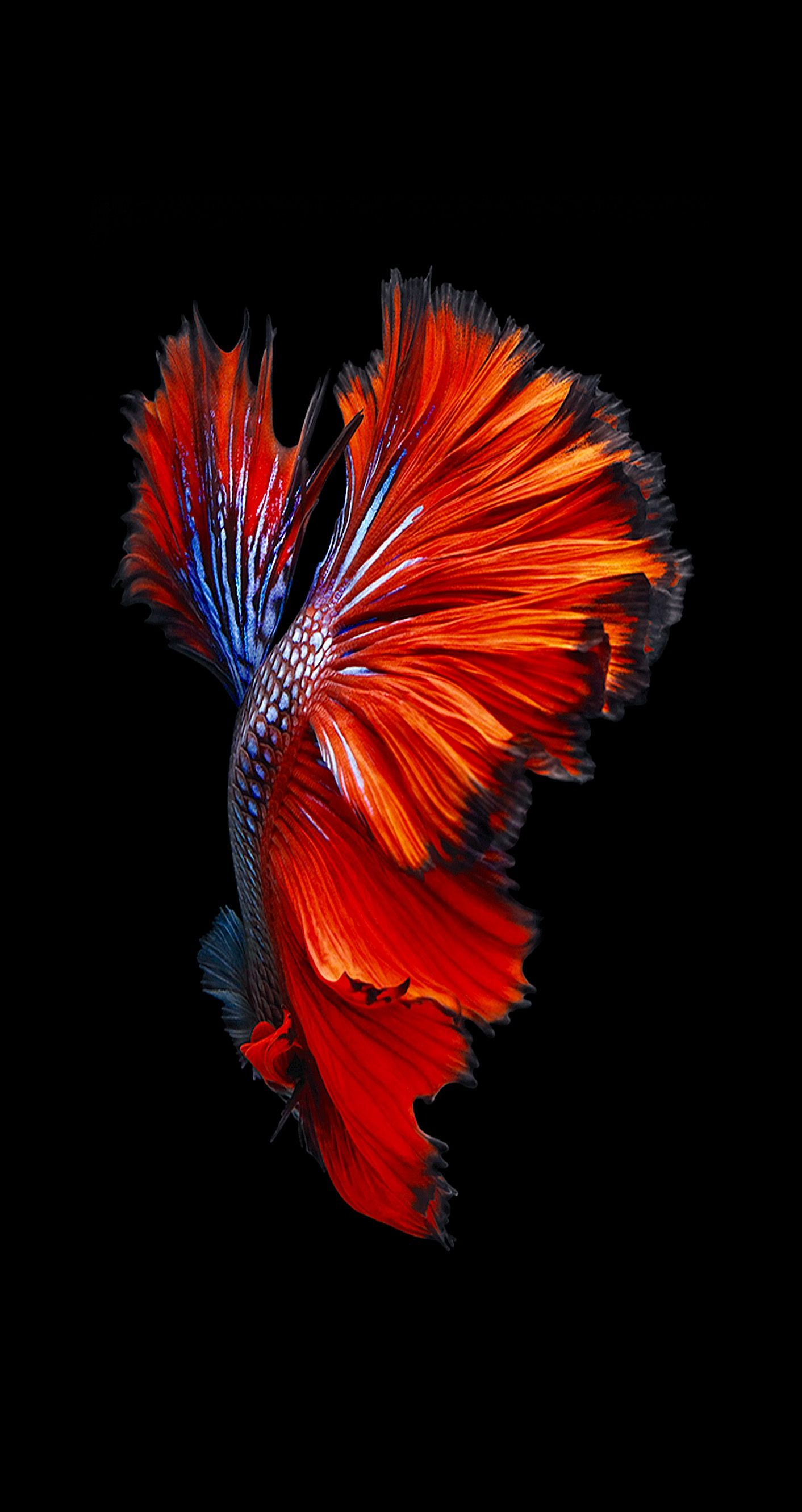iPhone 6s and iPhone 6s Plus dark wallpaper | design in 2019 | Fish wallpaper, Fish artwork ...