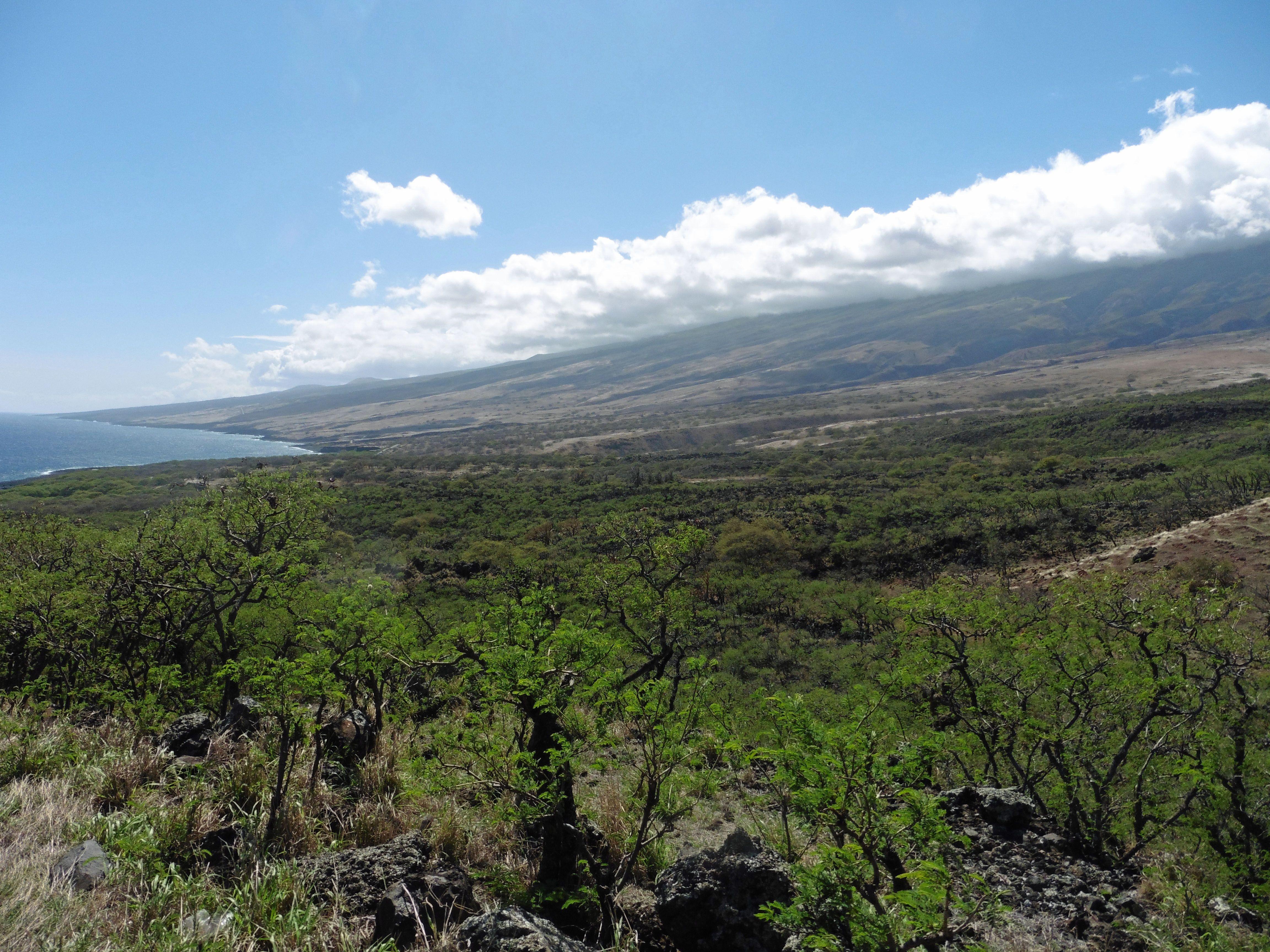 Maui, Hawaii. Sträckan från Kahului till Hana är vacker och grön. Men vänd inte om om du vill se Mauis andra ansikte. Bakom Haleakalan finns stora lavafält.