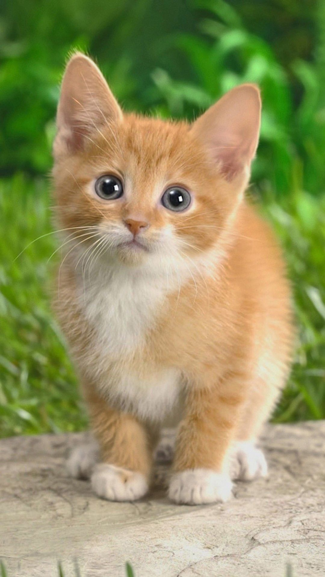 Cute Cat Iphone Wallpaper Download Best Cute Cat Iphone Wallpaperfor Iphone Wallpaper Inhigh Definition You Can Find O Cute Cats Kittens Cutest Cute Animals Best of wallpaper pictures of cute cats