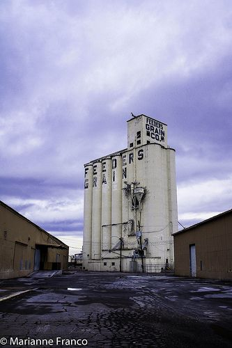 Day 349 - Feeders Grain, Phoenix, AZ