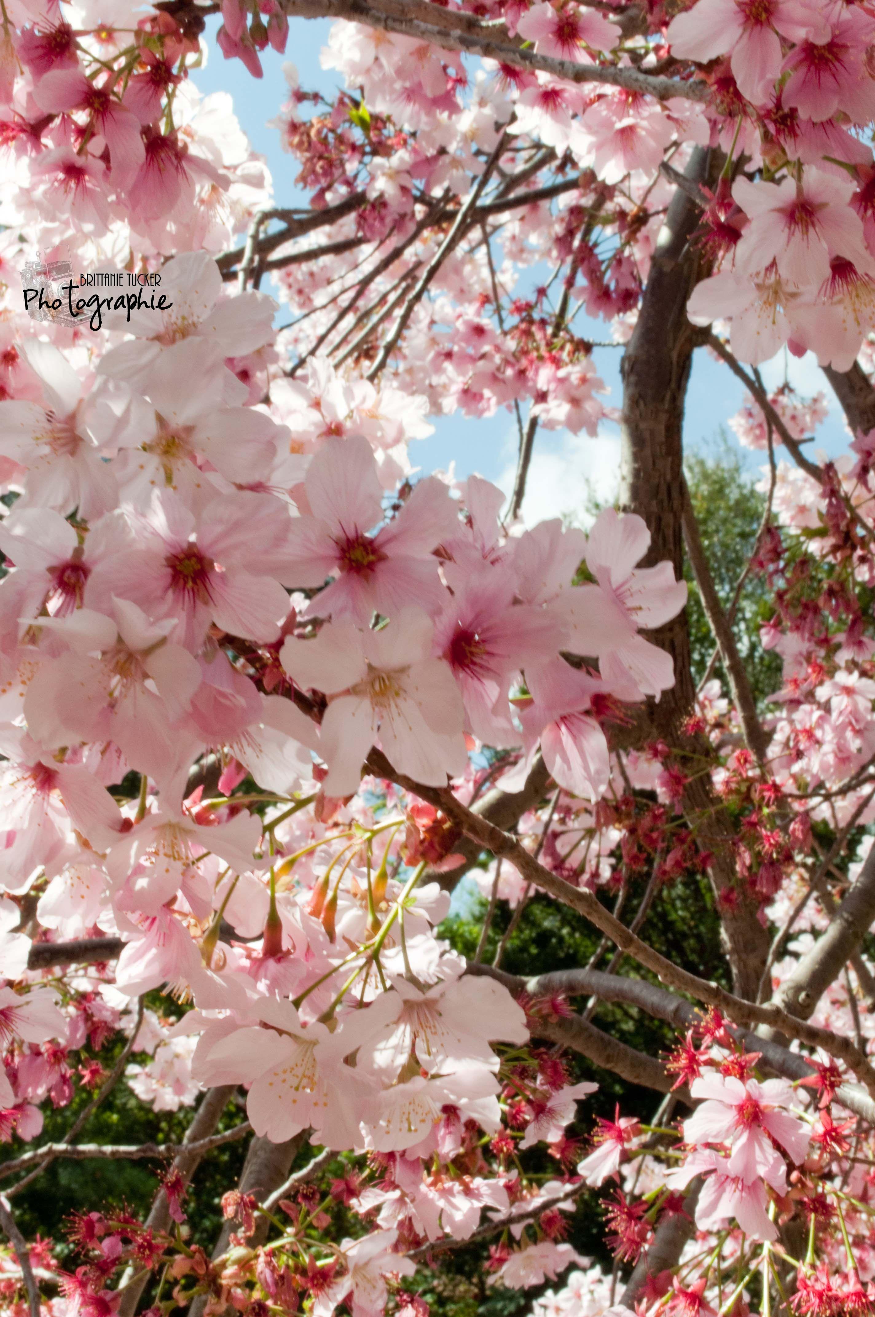 Btuckerphoto Com Beautiful Gardens Spring Blossom Huntington Library