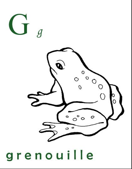 G Comme Grenouille Primary French Immersion Frog Coloring