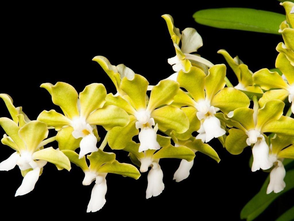 Orchids flower orchids pinterest