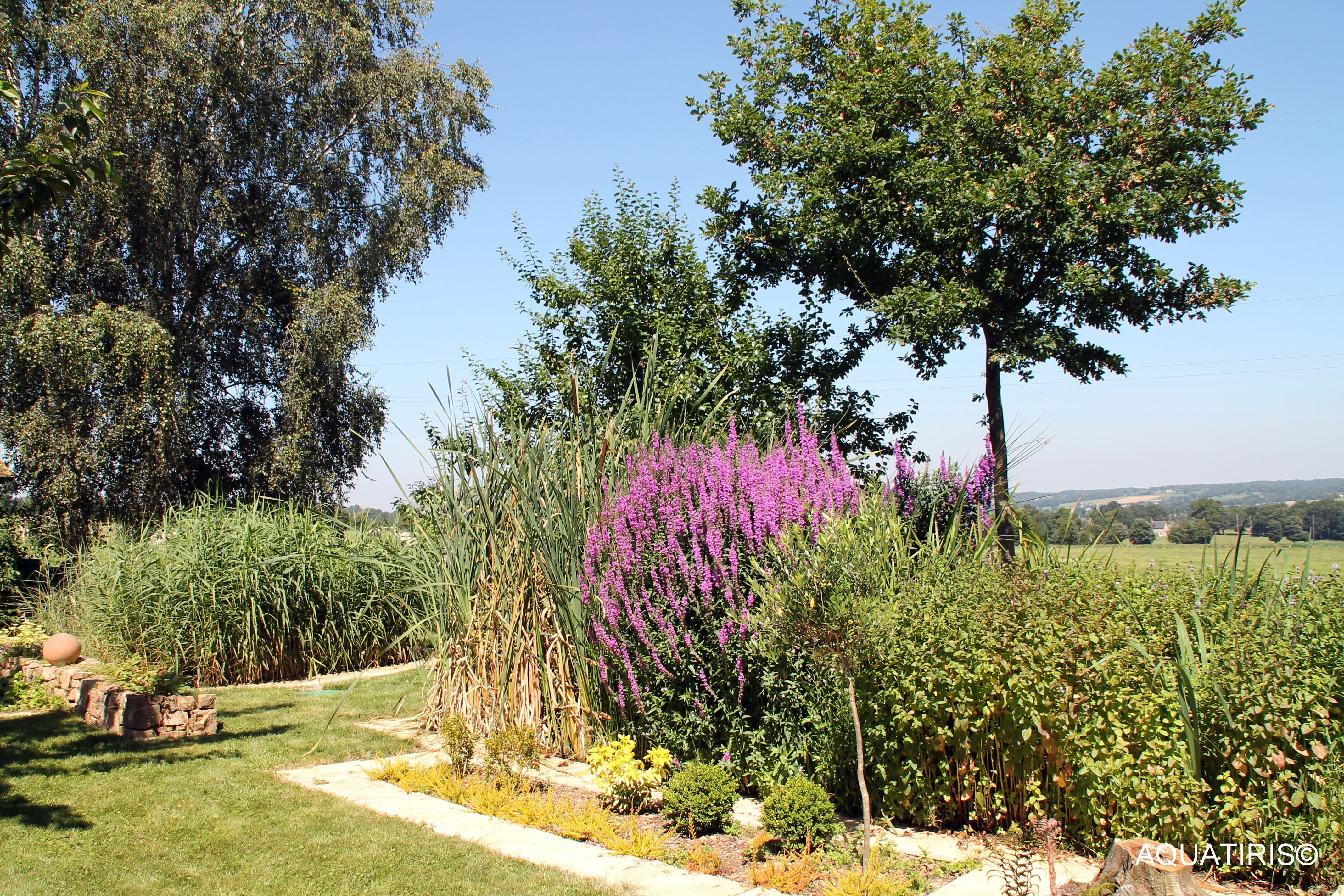 Jardin d assainissement Aquatiris Phytoepuration