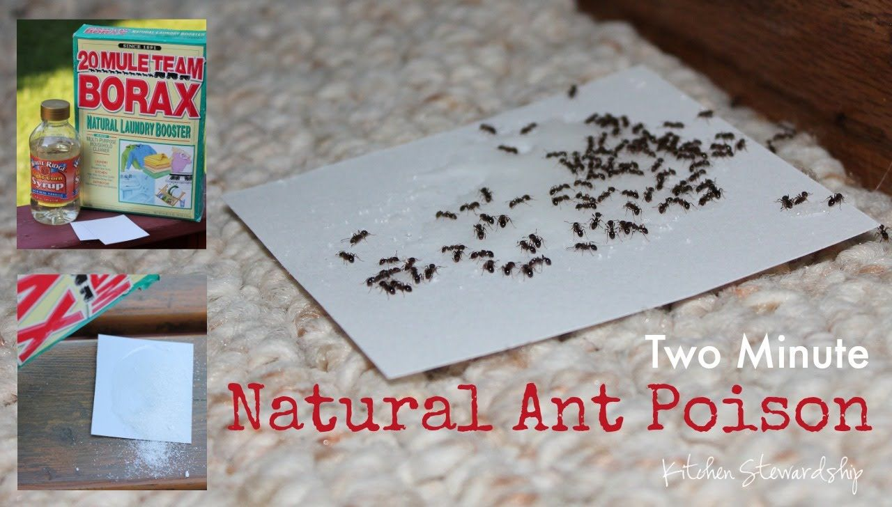 How to Make Homemade NonToxic Ant Poison Insect spray