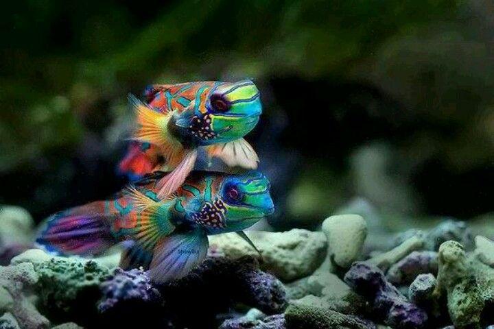 .Beautiful fish!