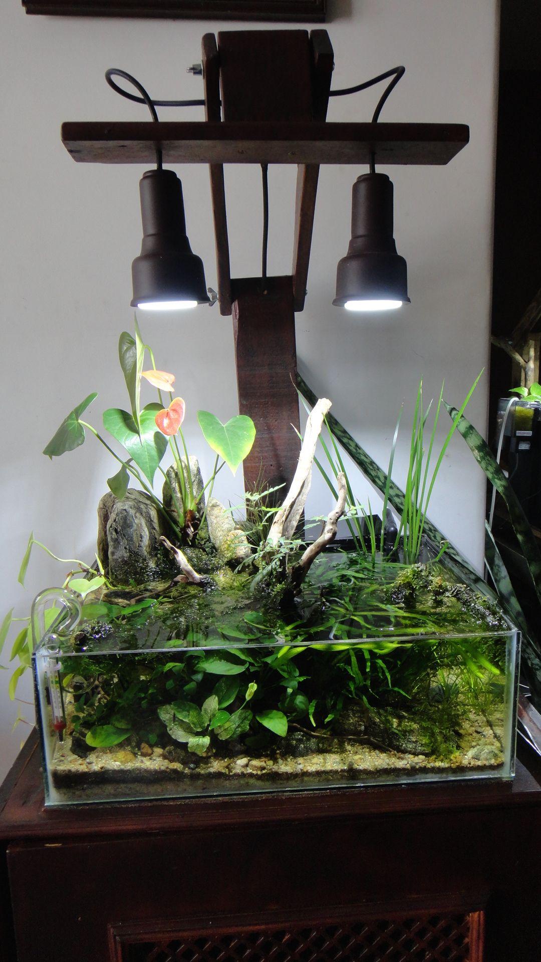 10 Live Coquina Clams If I Open a Zoo or Aquarium