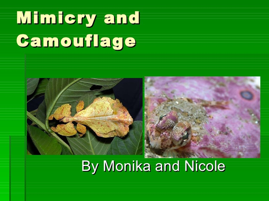 Mimicry And Camouflage By Nick Via Slideshare