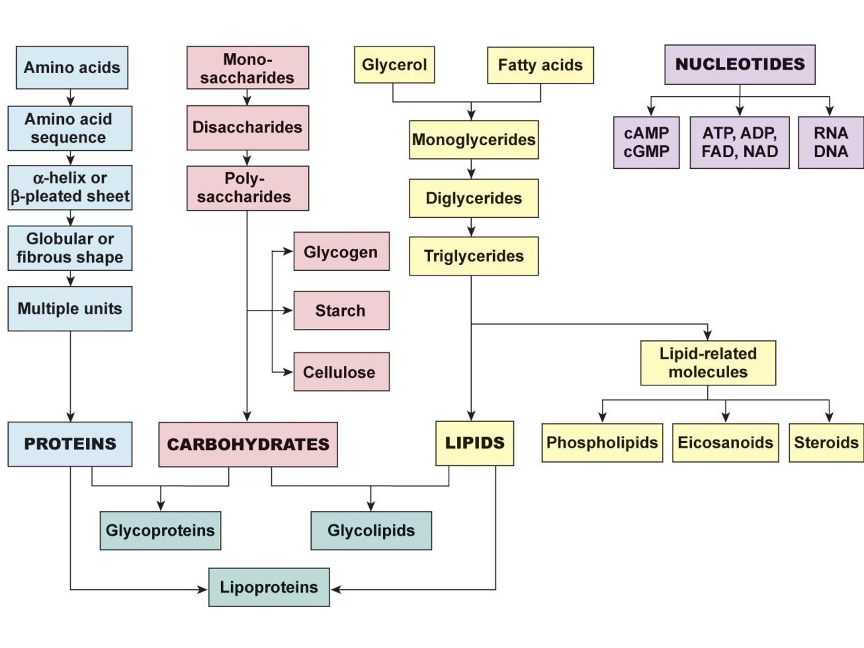Biochemistry Properties Of Water Organic Compounds