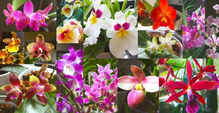 Basic Care Instruction For Growing Orchids Calgary #growingorchids