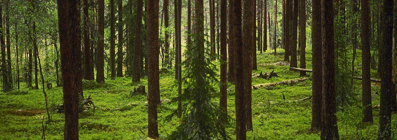 bergslagen skog - Google Search