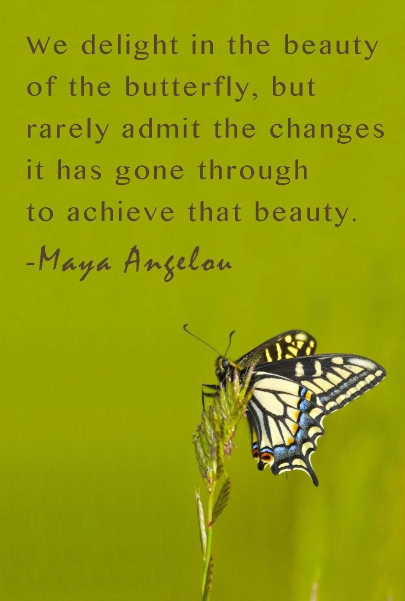 Motivational Quotes | Butterfly quotes, Inspirational words of wisdom,  Inspirational words