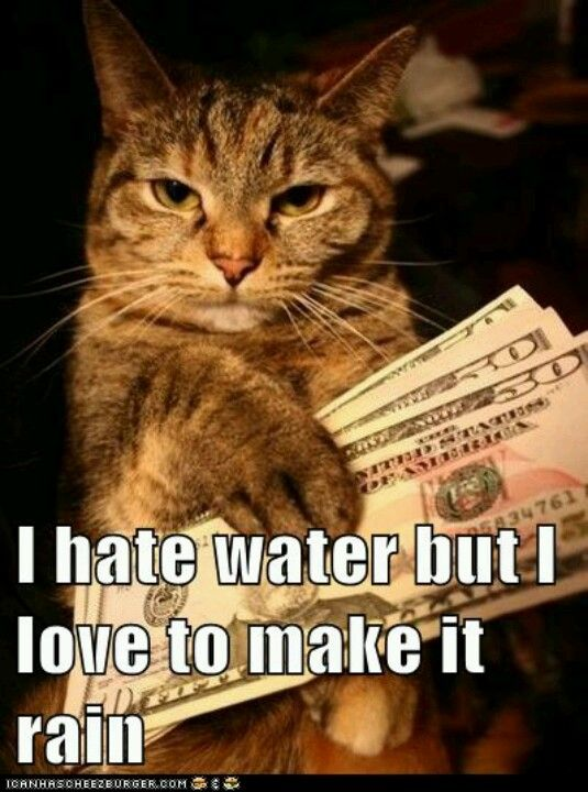 Youtube Cats, Tidy Cats, Cats