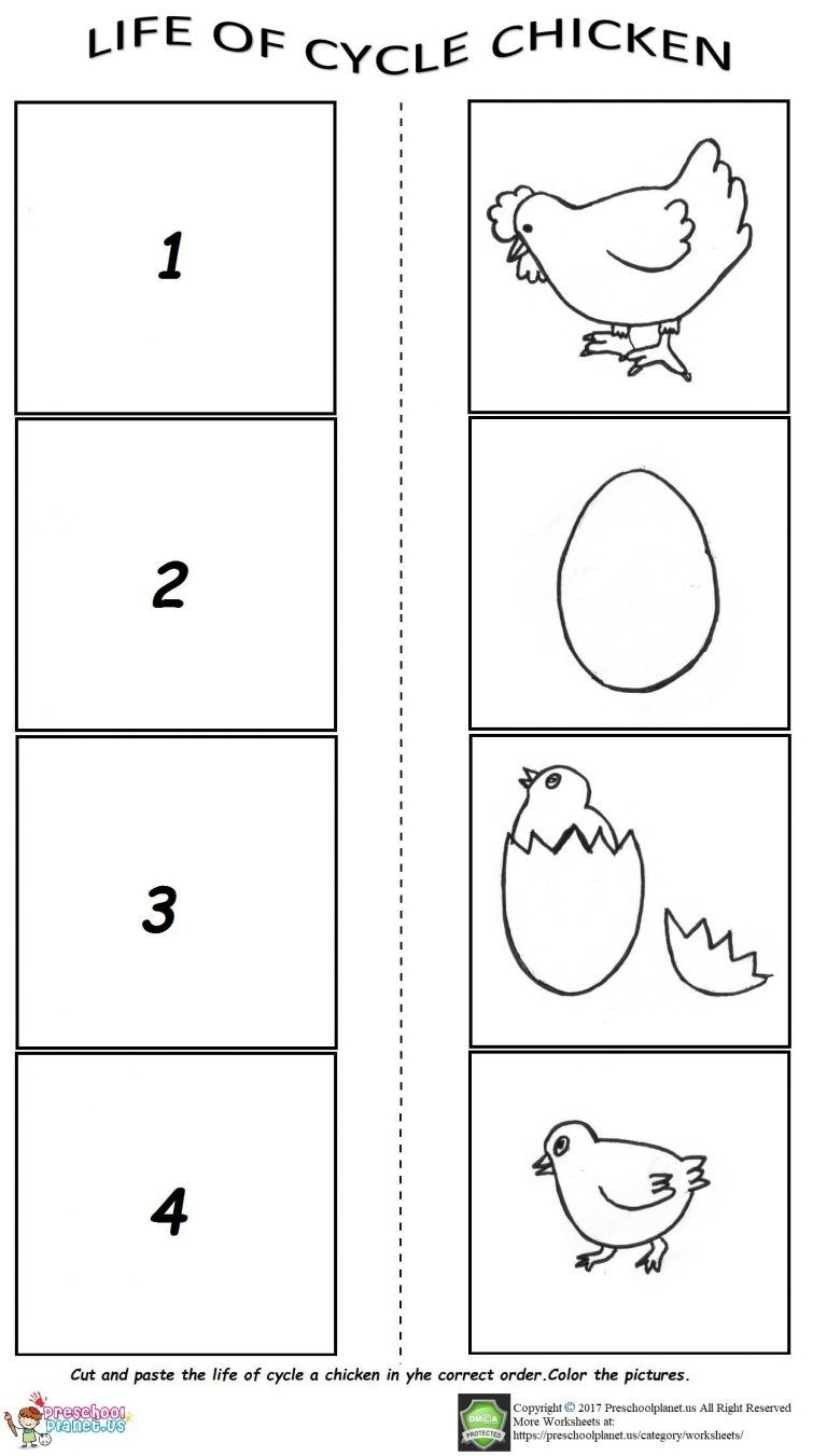 Life Of Cycle Worksheet For Preschool Life Cycles Preschool Worksheets Preschool Activities
