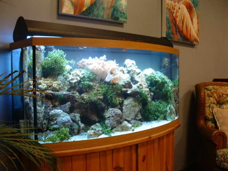 with aquarium d cor ideas for painting walls http