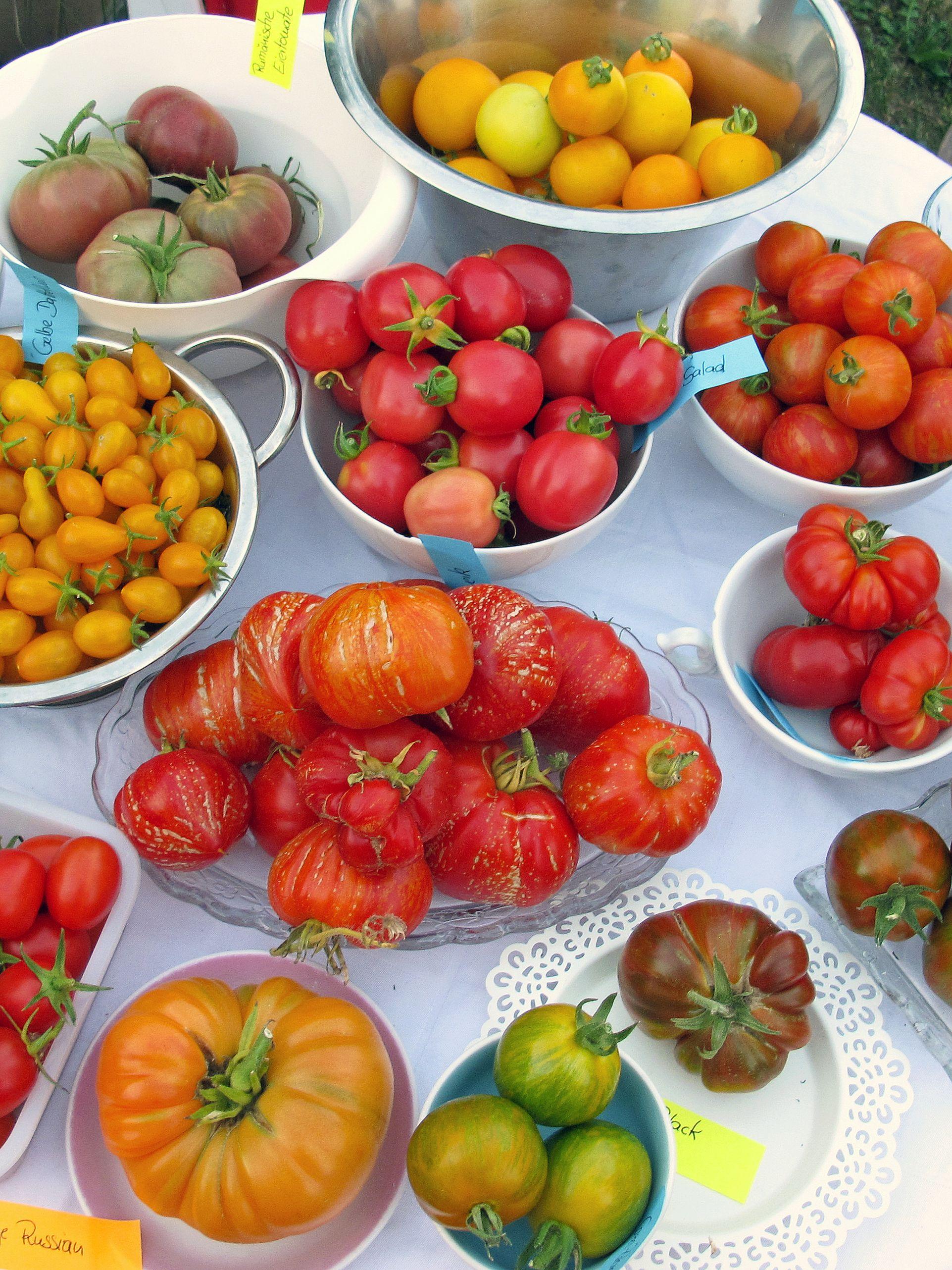 Übersicht bio-tomatensamen von magic garden seeds | diy tomaten