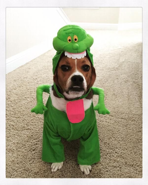 Ghostbusters Slimer Dog Costume Puppy Halloween Costumes Dog