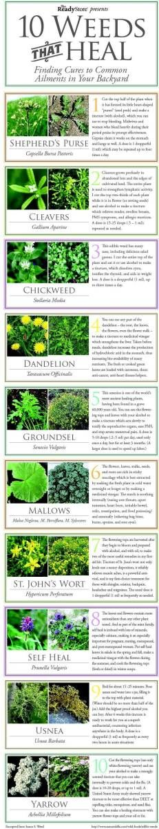 Top 10 Weeds That Heal Infographic