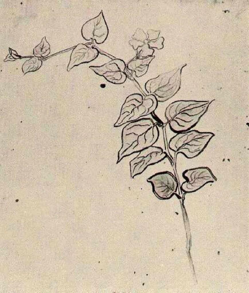 Branch With Leaves Vincent Van Gogh Art Van Gogh In