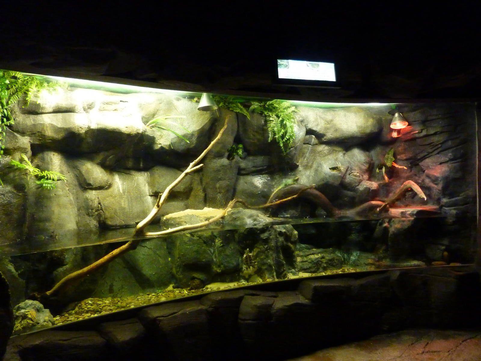 Chinese Water Dragon Enclosure