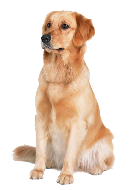 Check Out Our Site For Even More Info On Golden Retrievers It Is Actually A Superb Area To Get More Informa Golden Retriever Dogs Golden Retriever Retriever
