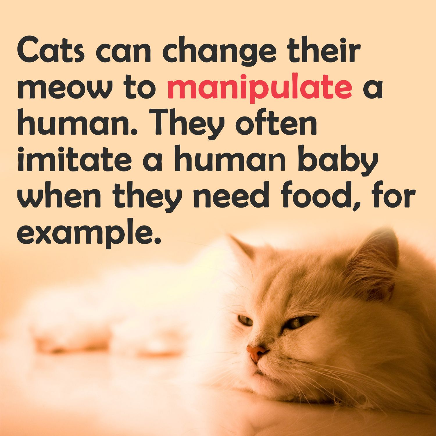 Cat Facts 33 Things About Cats You Didn T Know Cat Facts Human Babies Facts