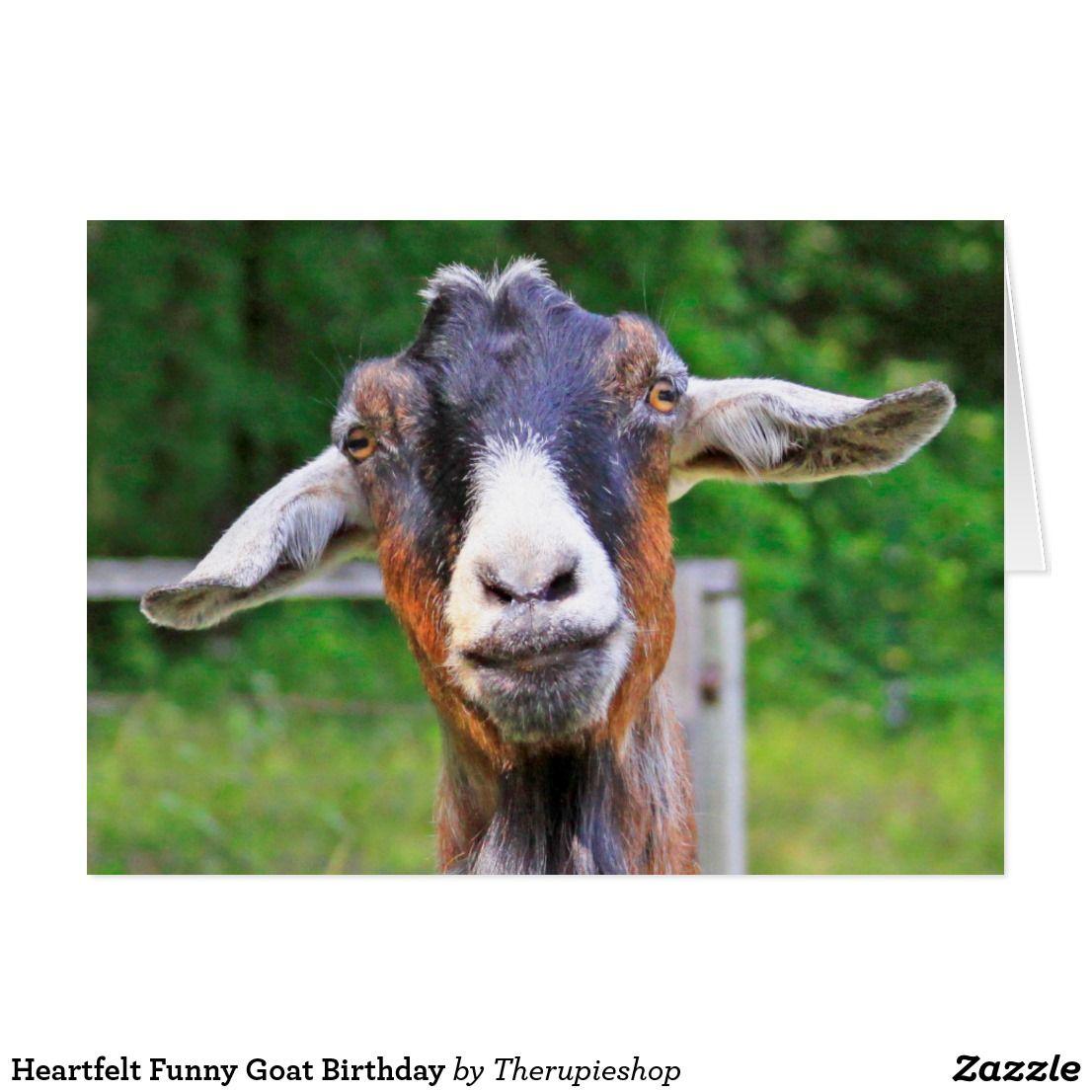 Heartfelt Funny Goat Birthday