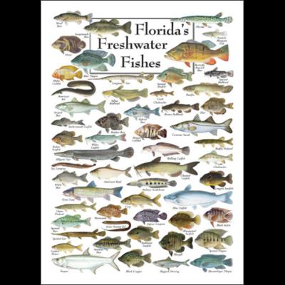 Florida S Freshwater Fishes Poster Freshwater Fish Fish Chart Florida Fish